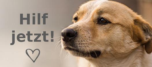 Uber Die Wunschlisten Von Uber 500 Tierschutzvereinen Futter