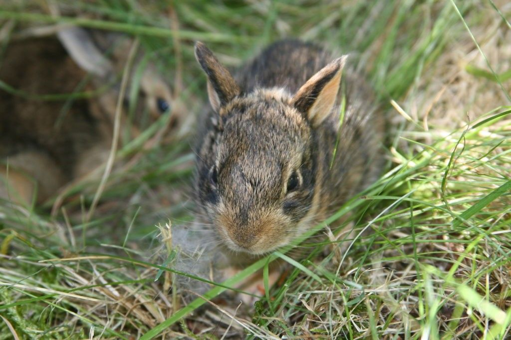 What To Do If You Find An Abandoned Bunny Baby Saving