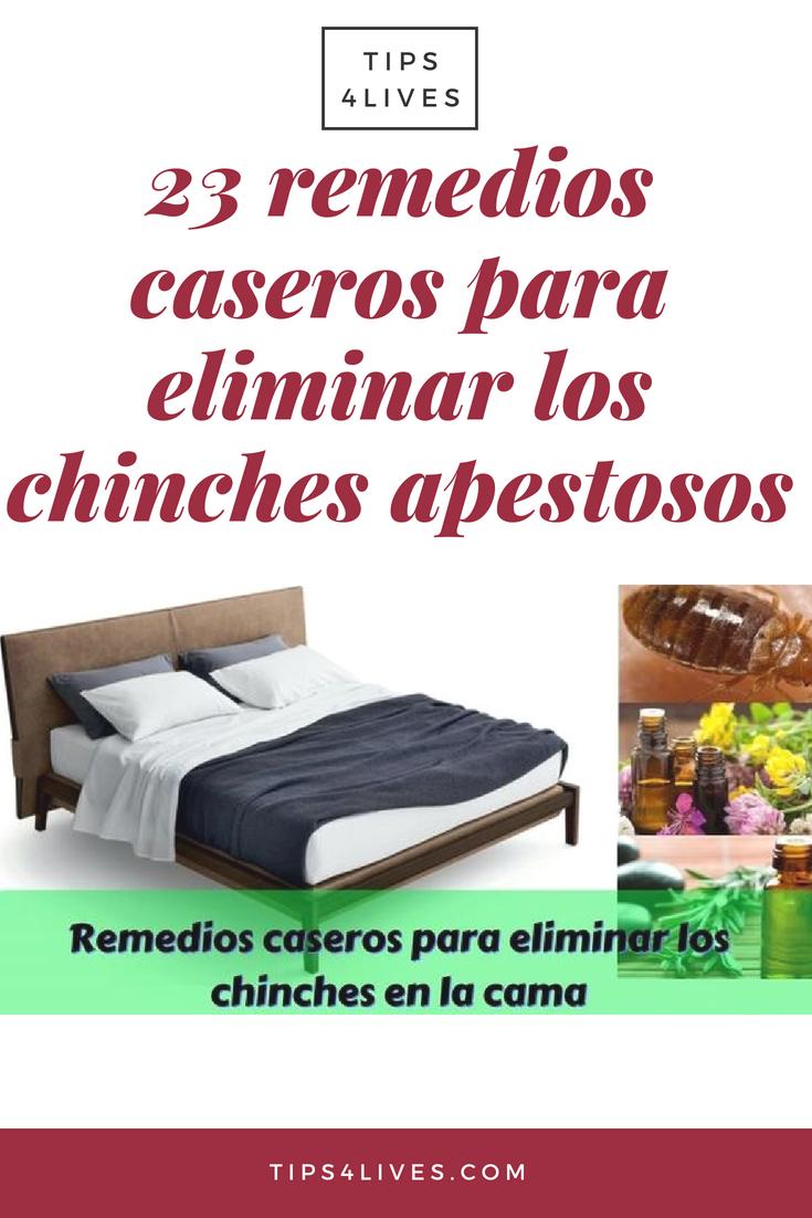 Como Acabar Con Las Chinches En Casa 23 Remedios Caseros Para Eliminar Los Chinches Apestosos Como