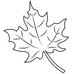 Ahornblatt einfach zeichnen Einfach zeichnen Ahornblatt