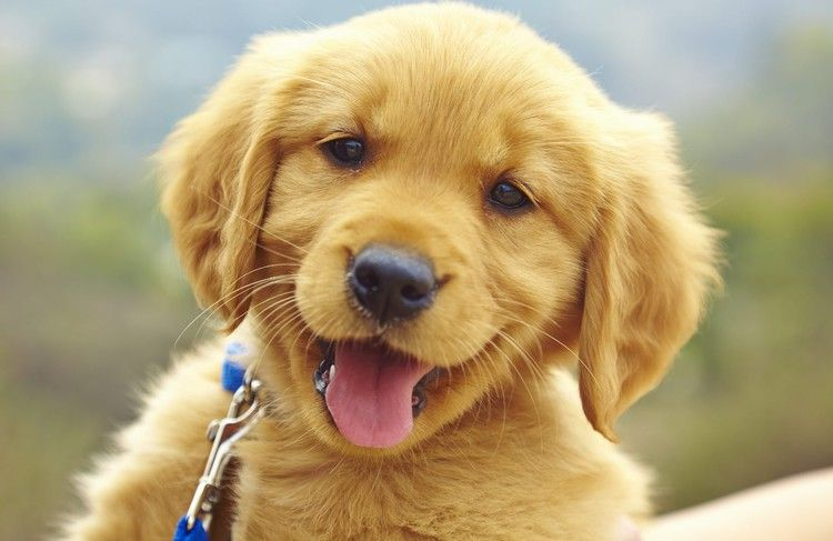How To Choose The Perfect Dog To Fit Your Lifestyle Family And