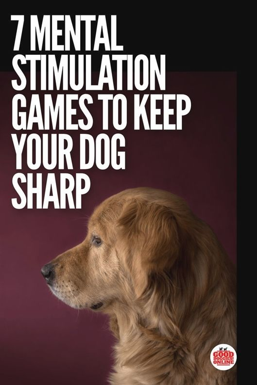 Dog Training Leave It Dog Training Pistol Dog Training 92128