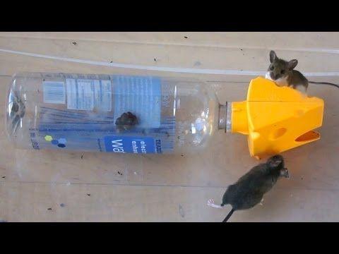 20511271470e2ce01b4d11a889ed98ef - How To Get Rid Of Mice In Car Hood