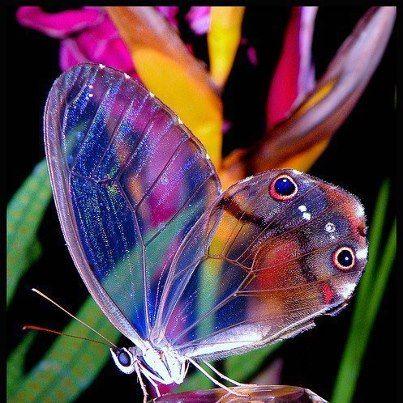 amazing butterflies - Cerca con Google