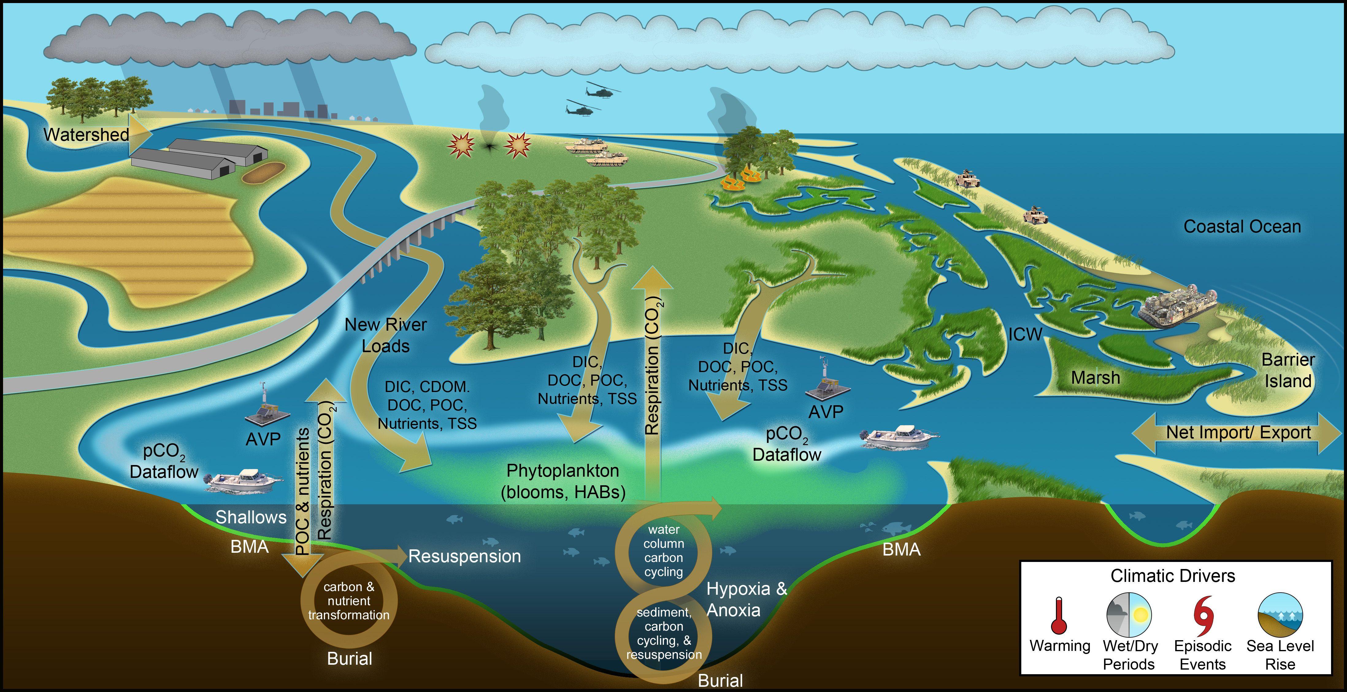 Conceptual Model For The Aquatic Estuarine Module