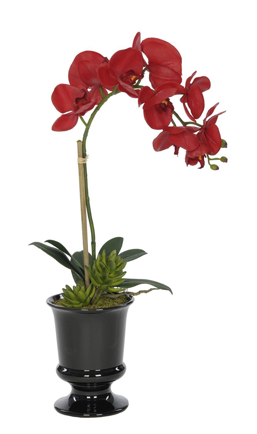 House of silk flowers artificial red phalaenopsis orchid in black house of silk flowers artificial red phalaenopsis orchid in black ceramic urn to view further for this item visit the image link mightylinksfo