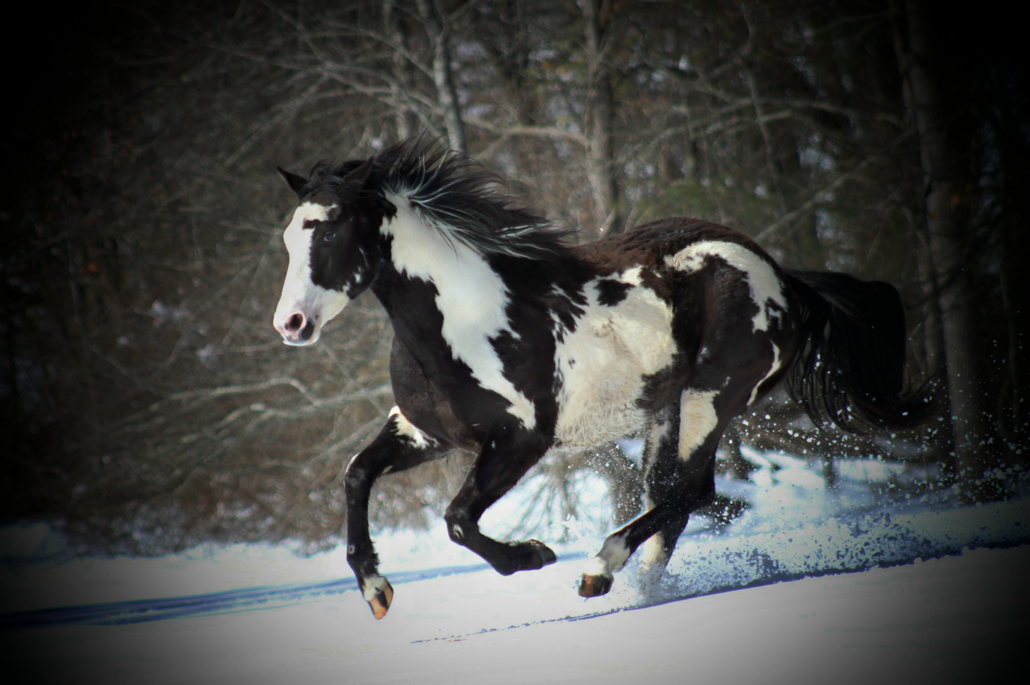 Black And White Ponies