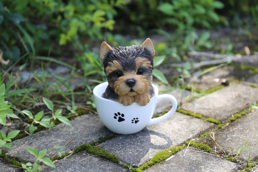 Pet Pals Teacup Yorkshire Terrier Puppy Yorkshire