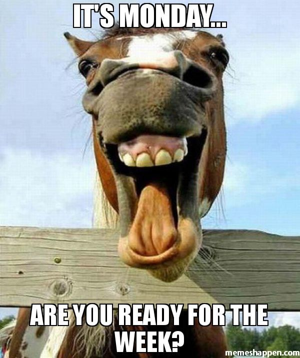 It S Monday Are You Ready For The Week Meme Funny Horse Face 40746 Memes Happen Funny Horse Face Laughing Horse Horses