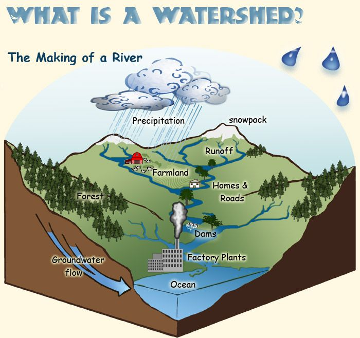 CSERC Watershed Game learn about what a watershed is and how we – Watershed Worksheet