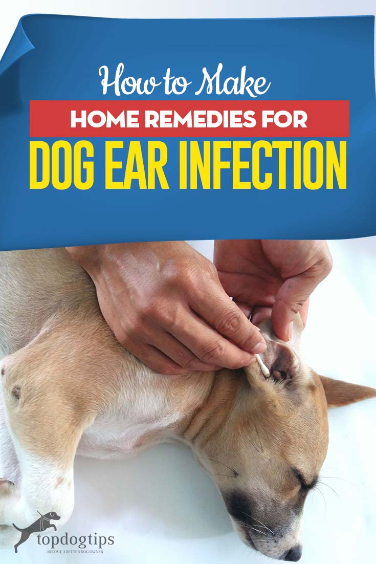 How to Make Home Remedies for Dog Ear Infection | Dogs ...