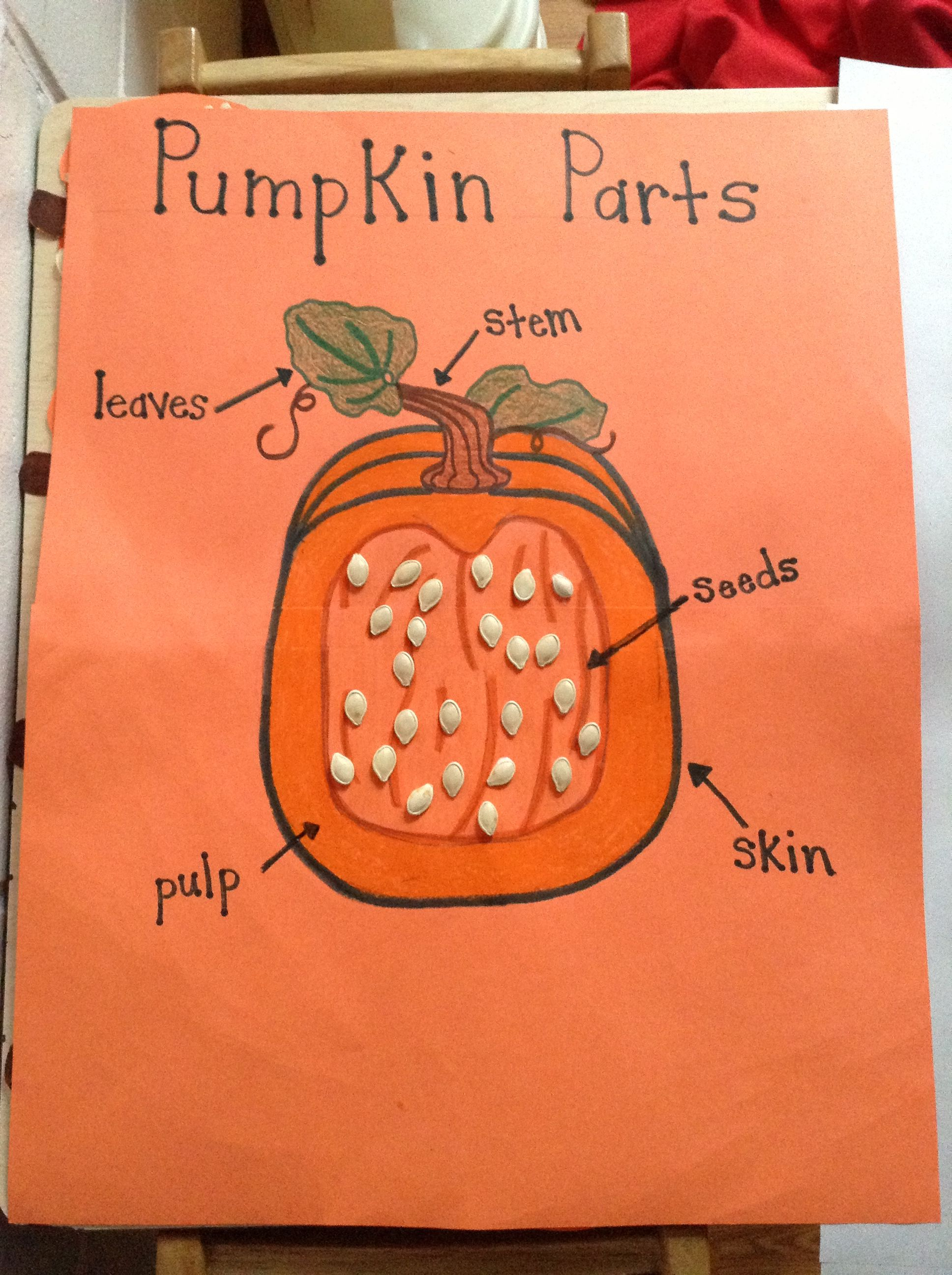 Parts Of A Pumpkin Chart Preschool