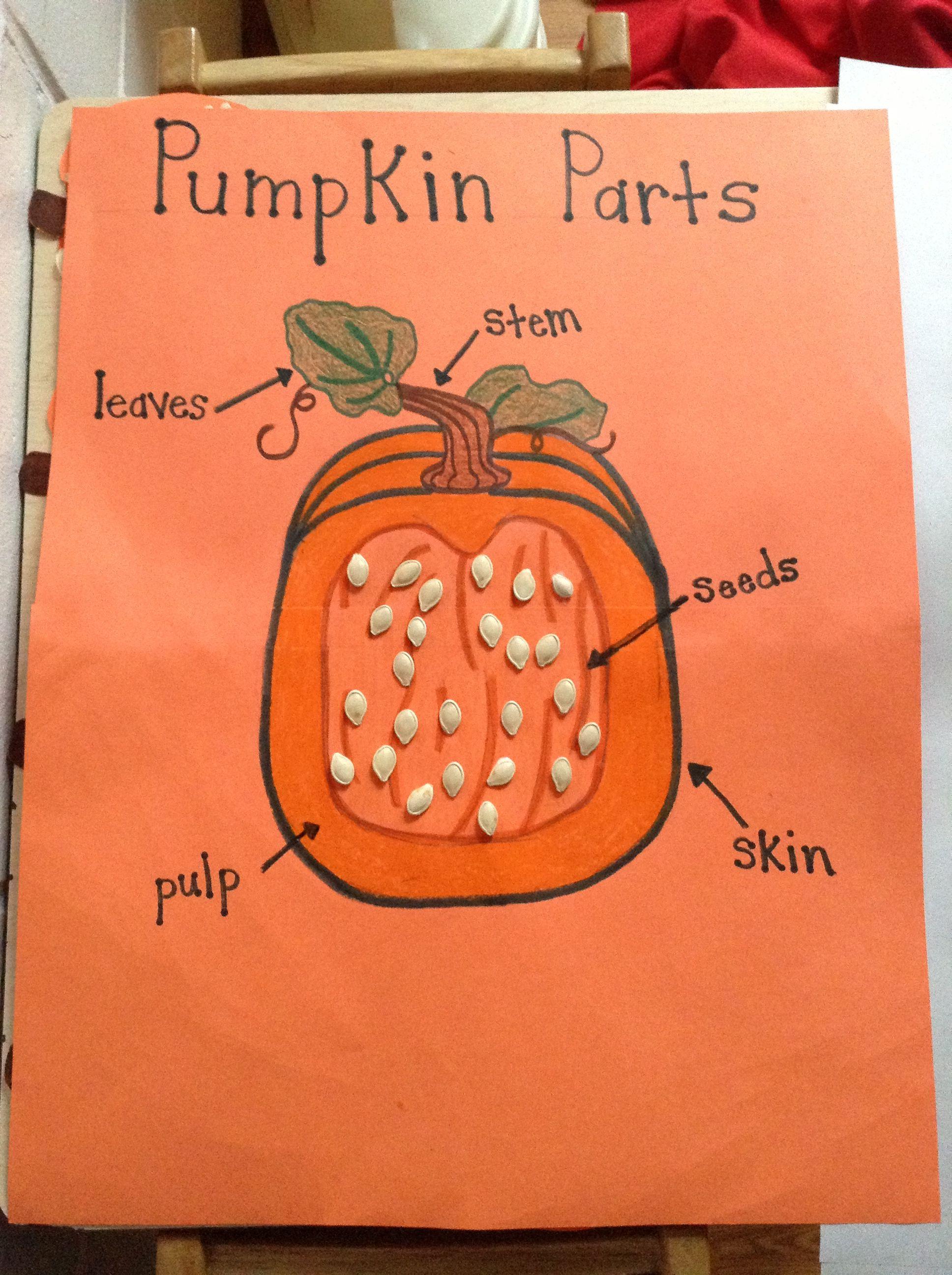 Parts Of A Pumpkin Chart Preschool