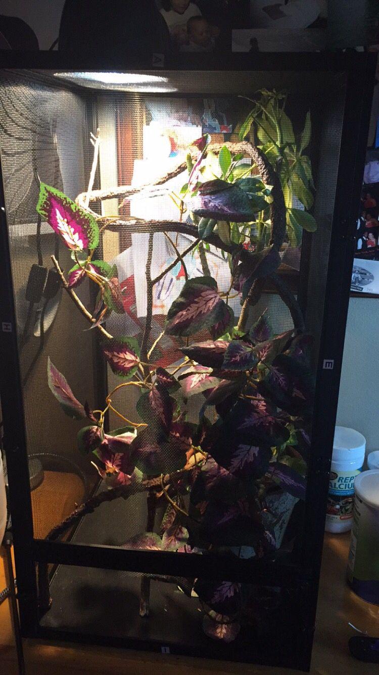 Cage Set Up For A Juvenile Veiled Chameleon Medium