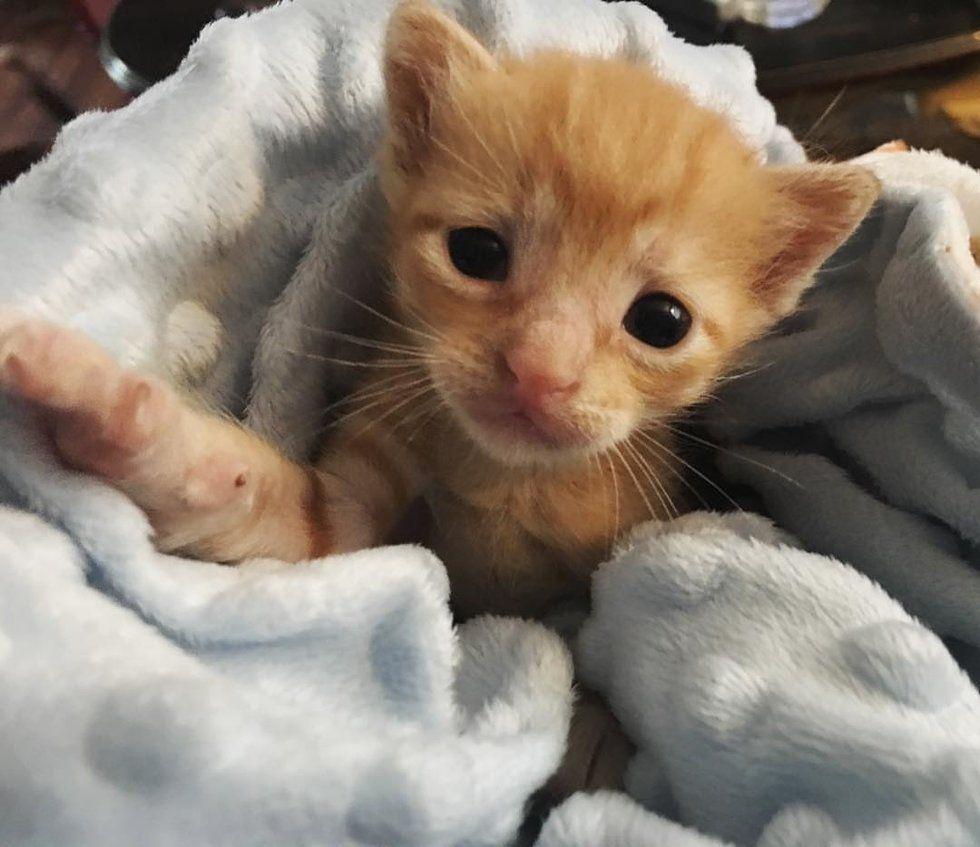 Pin On Cat