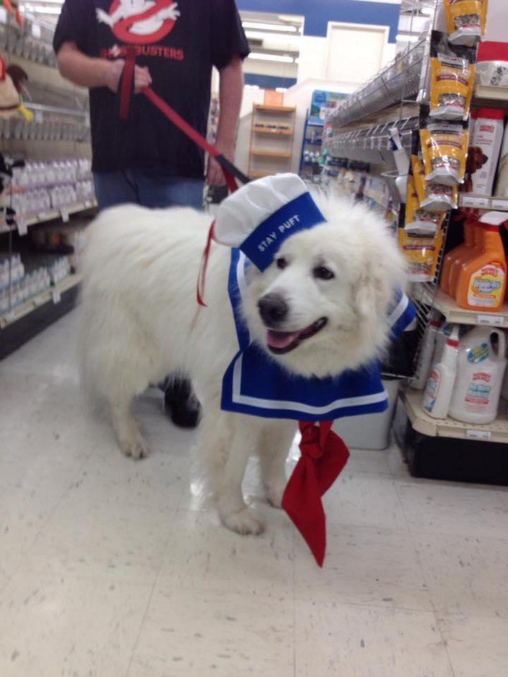 Dog & Larger dog breeds often get overlooked when it comes to costumes ...