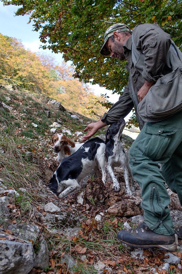 Best Dogs For Truffle Hunting