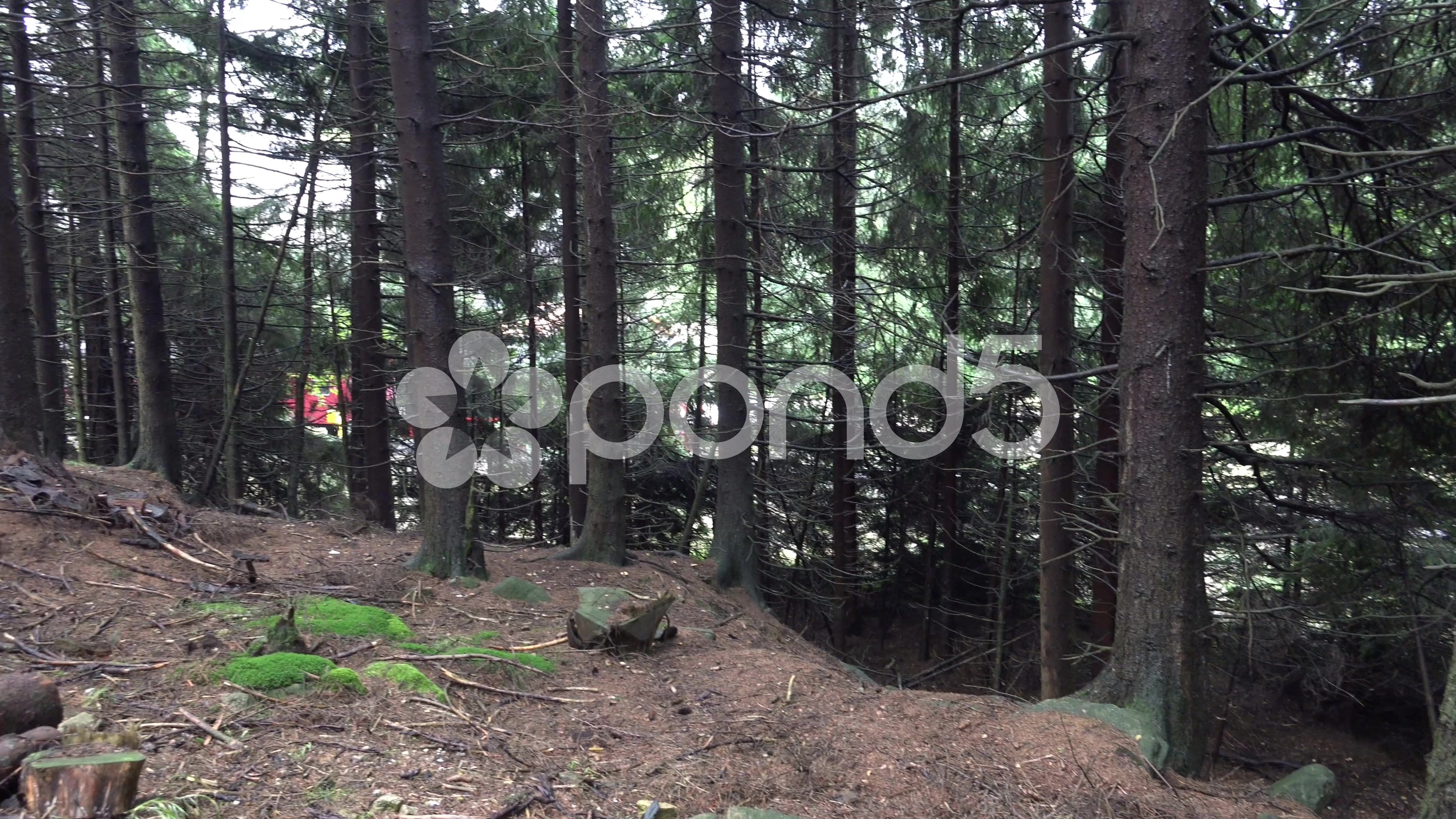 4k Forest panning view of starting classic steam locomotive - Stock Footage | by Beckhusen