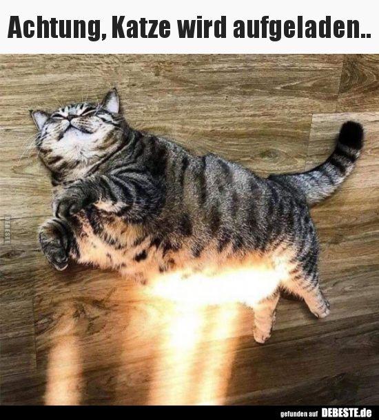 Photo of Advertencia, el gato está cargando .. |  Fotos graciosas, refranes, chistes, muy graciosos
