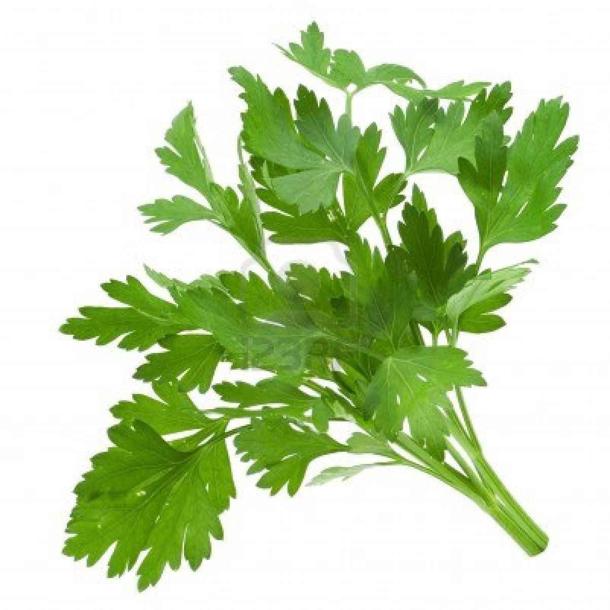 Parsley - give sparingly with plenty of water (high in calcium and can cause urine to be thick and sludgy)