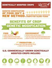 Learn About Genetically Modified Crops And The Economic Benefits
