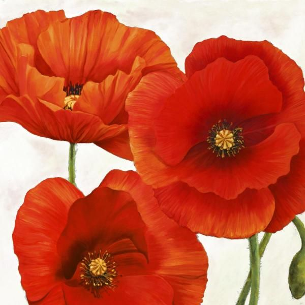 Luca Villa - Poppies I - art prints and posters