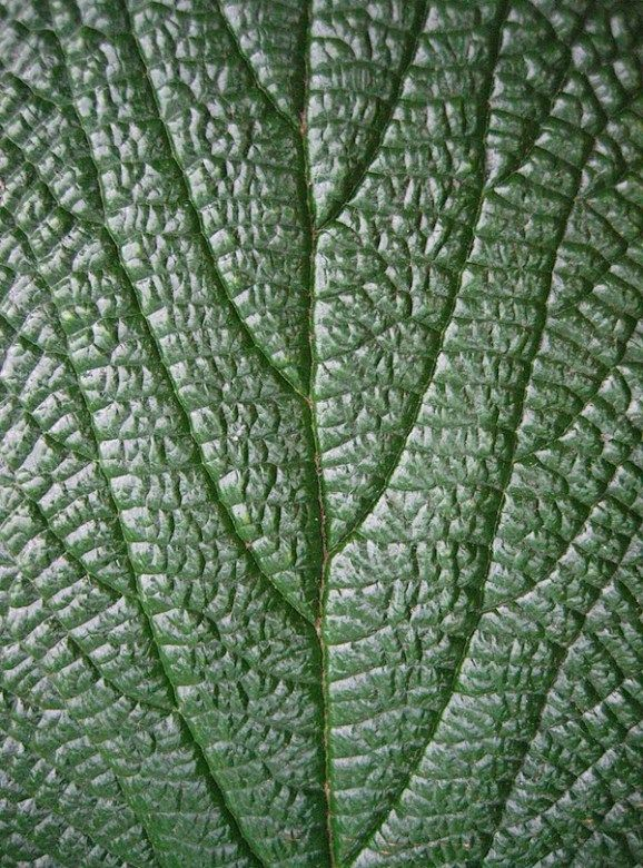 Variety: This shows line, texture and movement all in the same photo. The line in the middle of the leaf acts as a divider between the two sides, the lines moving away from the middle of the leaf makes your eyes follow them out, and the texture is from each of the small bumps on the leaf, giving you a sense of what that woul feel like.