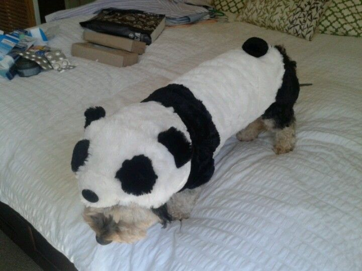 dog costume for halloween dachshund sized panda suit cute