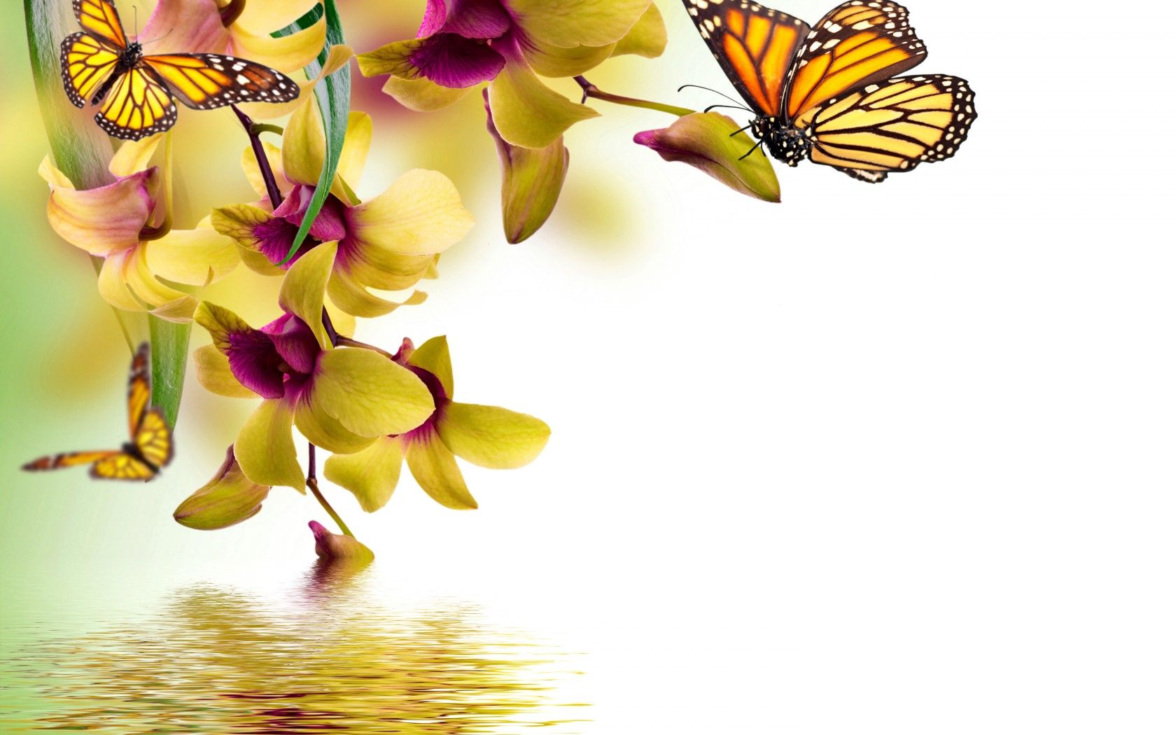 Beautiful Orchid Flowers And Butterfly Reflected In Water Hd Wallpaper By MariJane