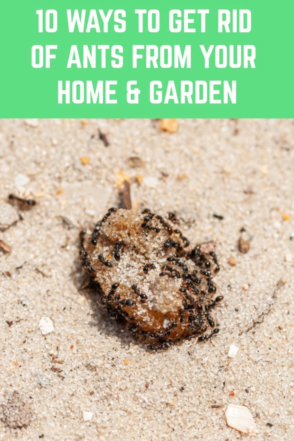 How To Get Rid Of Ants From Flower Pots
