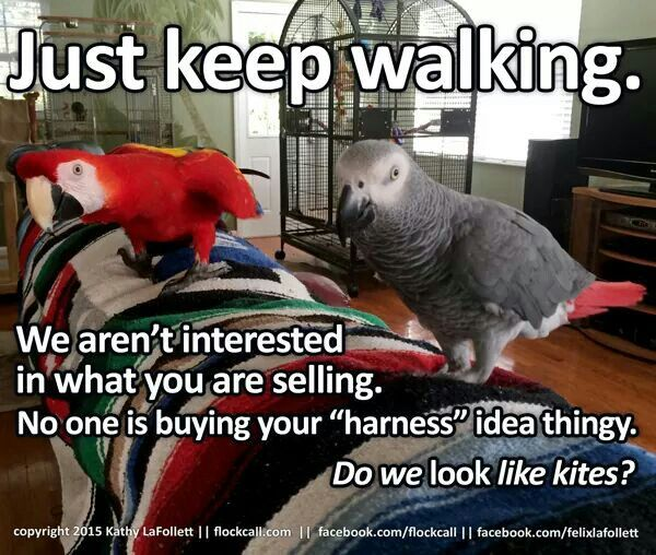 Pin By Andrea Cotton On Pet Birds Diet Toys Etc Funny Parrots Funny Birds Pet Birds