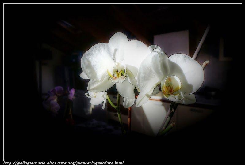 fotografie e altro...: Orchidea - HDR - photographic processing (61)