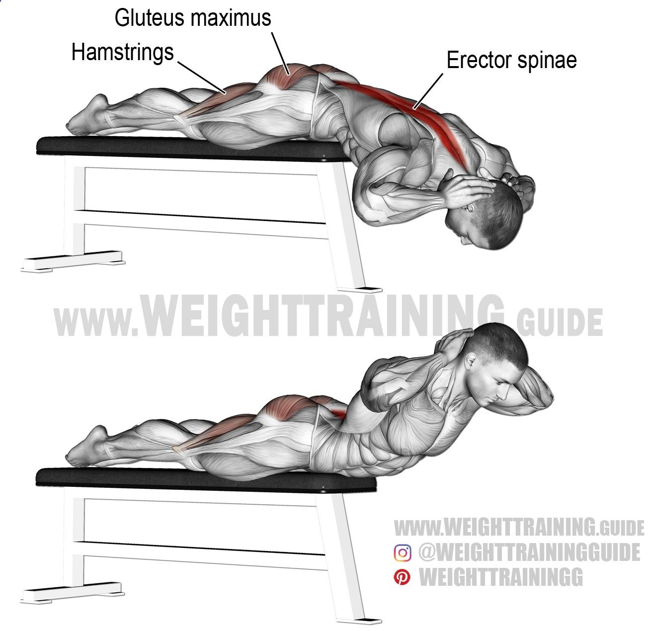 Flat bench hyperextension. A compound exercise. Target muscle ...