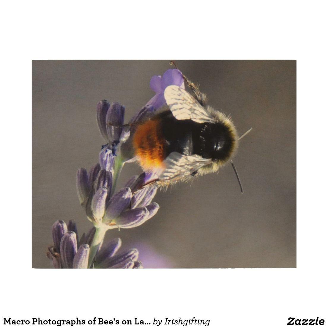 Macro Photographs of Bee's on Lavender. Wood Print