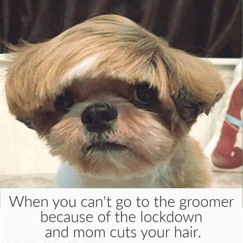 Pin On Pet Quotes Memes