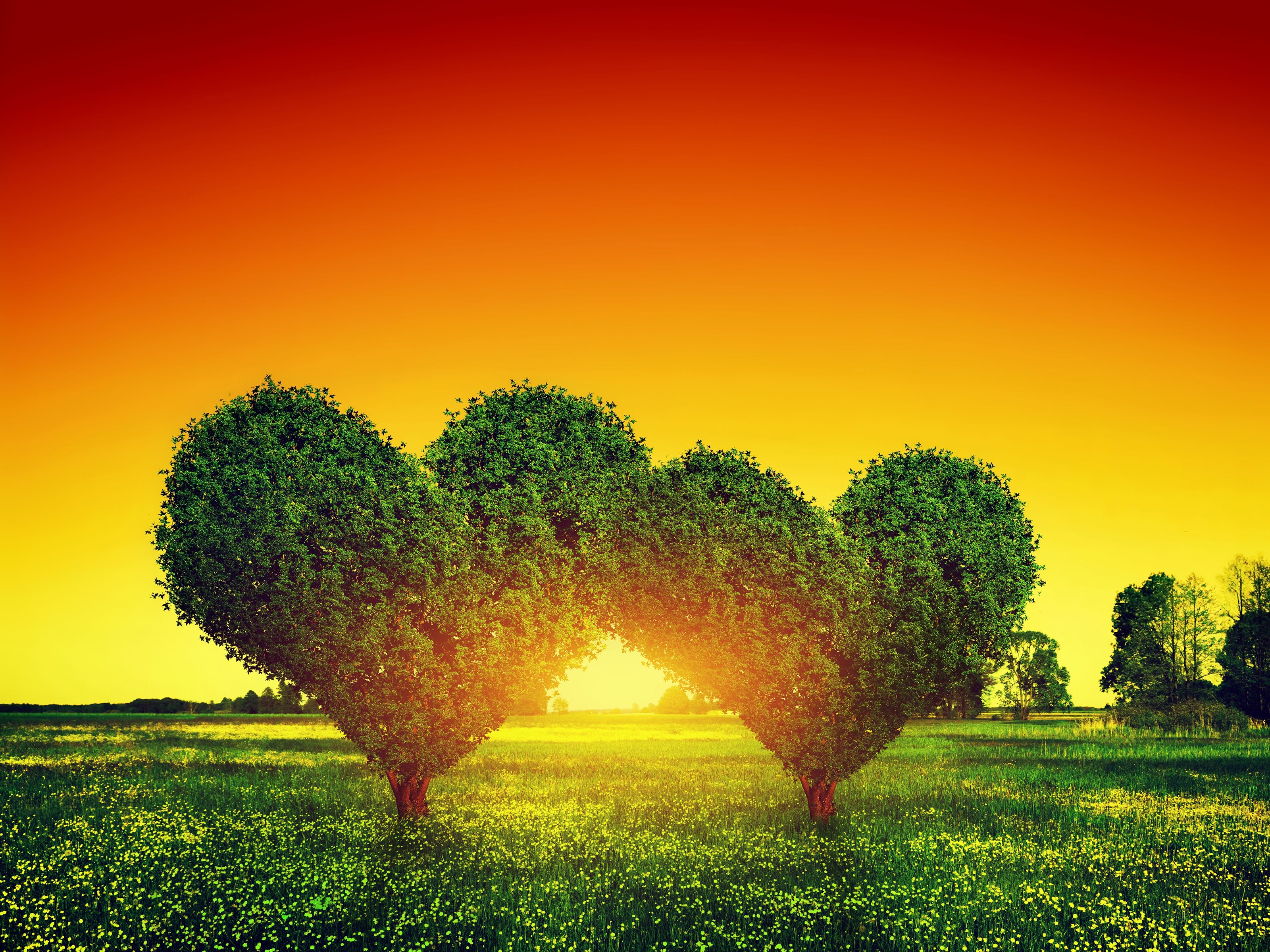 Good Wallpaper Love Green - 2059158feca33ccfc33036aab431bdf4  Snapshot_807753.jpg