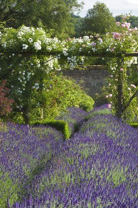 Pin de isela moreno en fabuleux jardin pinterest for Jardines de lavanda