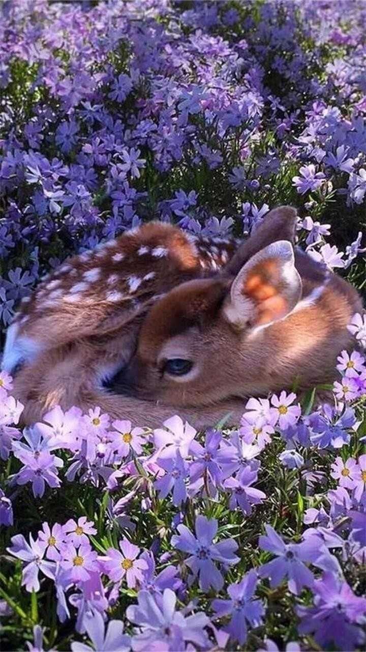 animals cutest  baby deer  cute baby deer  animals wild  deer photography