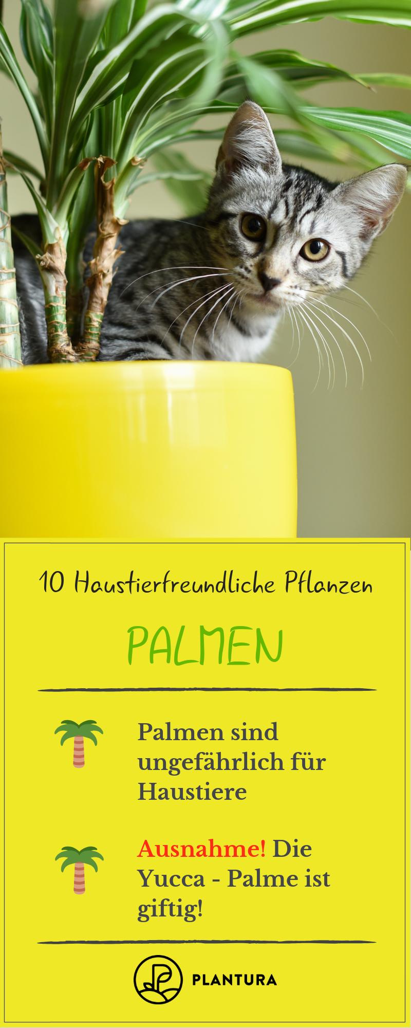 10 Haustierfreundliche Pflanzen Fur Garten Wohnung Pflanzen Garten Pflanzen Und Giftige Pflanzen