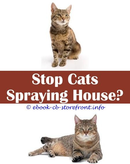 7 Fair Cool Ideas Keep Cats Off Coutners With Spray Doorbells Make My Cat Spray Cat Flea Spray For Furniture Lemon Spray To Stop Cats Spraying Co Con Imagenes Bebe Sensible