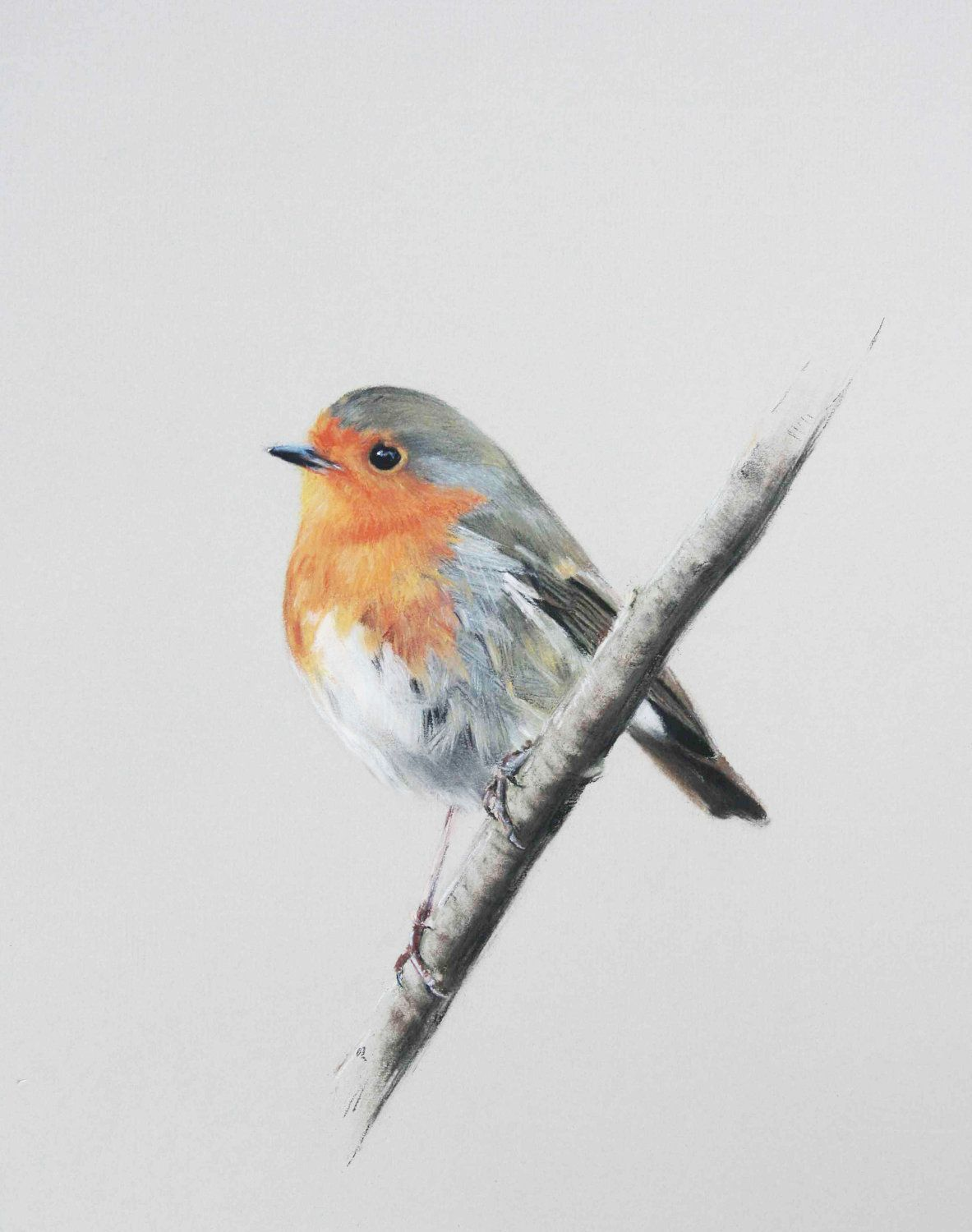 Rotkehlchen Aquarell Robin Limited Edition Giclee Print From Original Pastel Drawing By