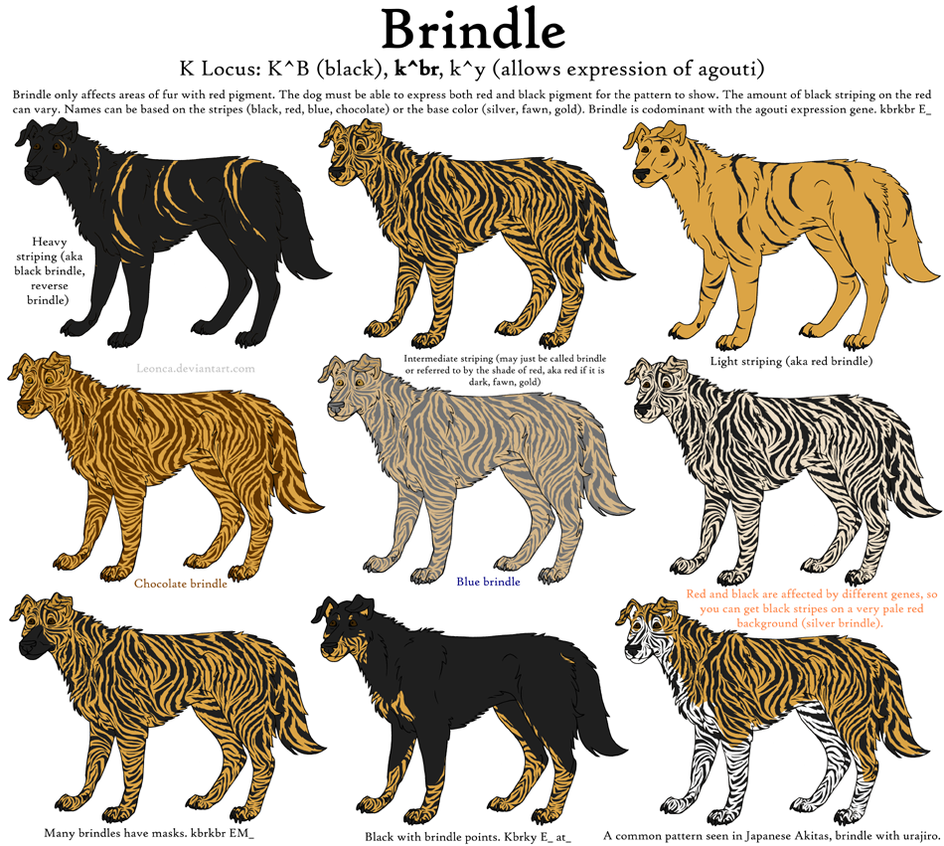 Guide to brindle dog coat pattern and colors dog coat pattern animal nvjuhfo Image collections