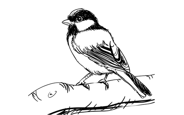 How To Draw A Bird Step By Step Bird Drawings Drawings Sketchbook Challenge