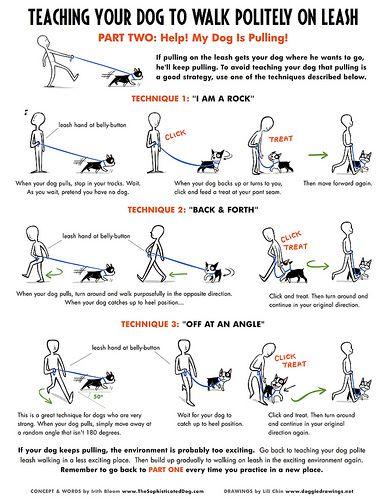 Loose Leash Walking Part 2 Dog Training Dog Training Tips Dog Care