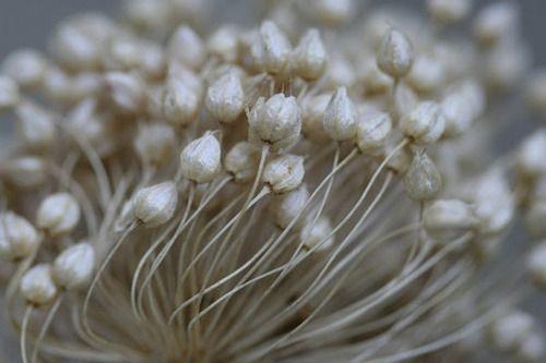 Qualquer flor