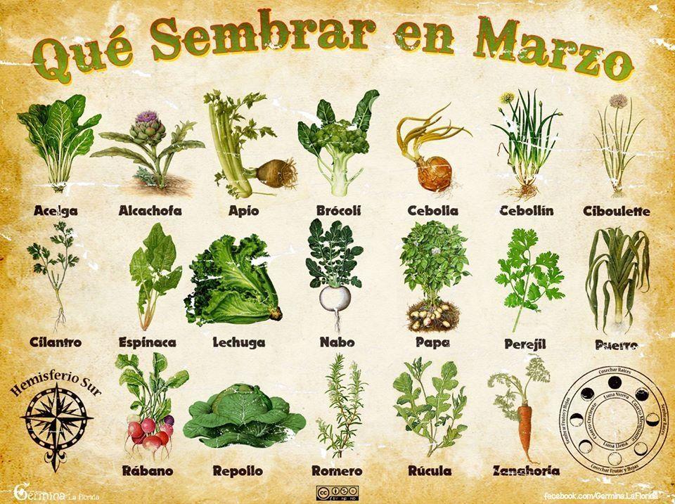 Que sembrar en Marzo. Huerta propia | Huerta, Propios y Huerto