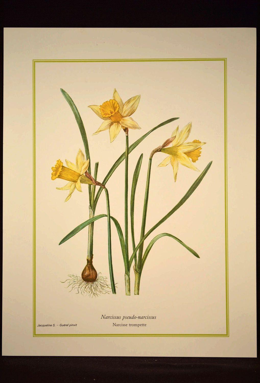 Daffodil Print Yellow Flower Print Nature Wall Art Daffodils | Walls