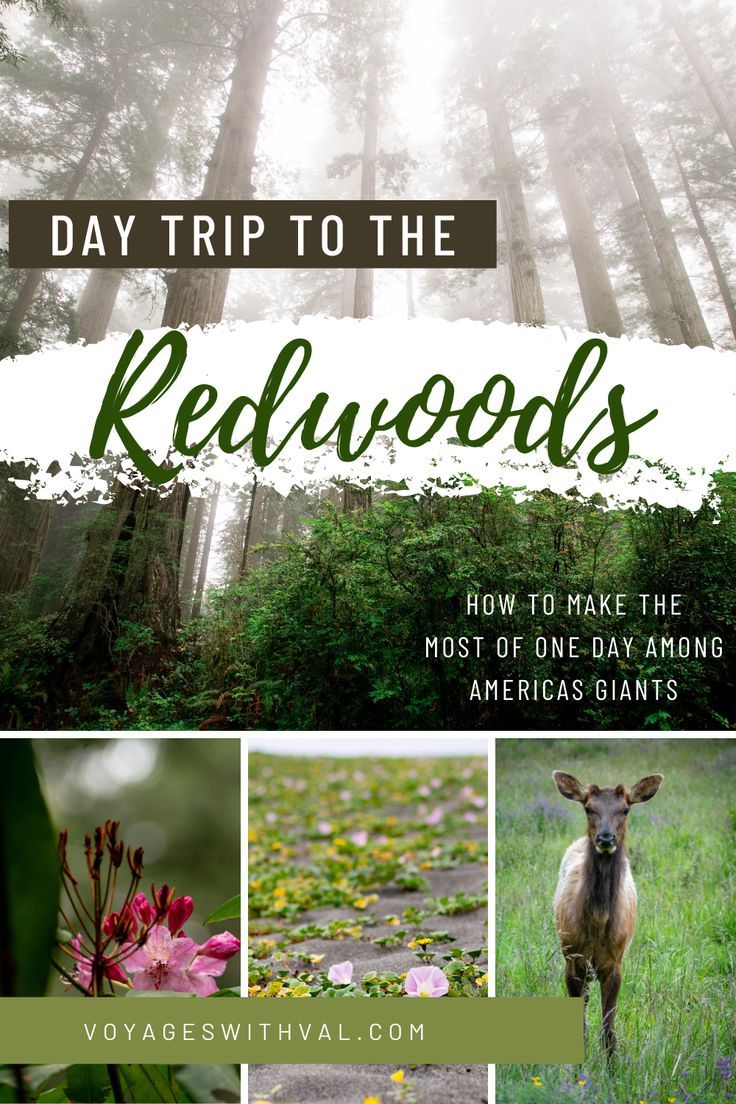 Day Trip to the Redwoods