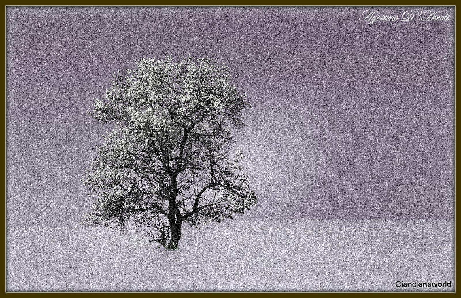 L'albero solitario - Febbraio-2016