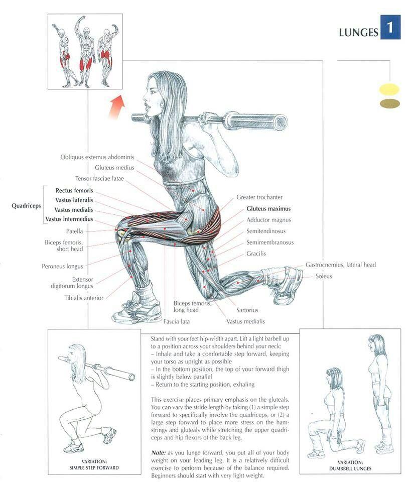 http://musclebuildingworkoutop.blogspot.com.co/ Lunges ~ Re-pinned ...